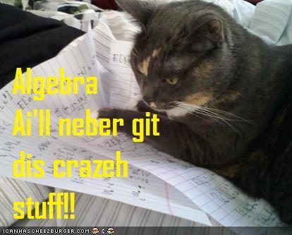 Cat dislikes algebra