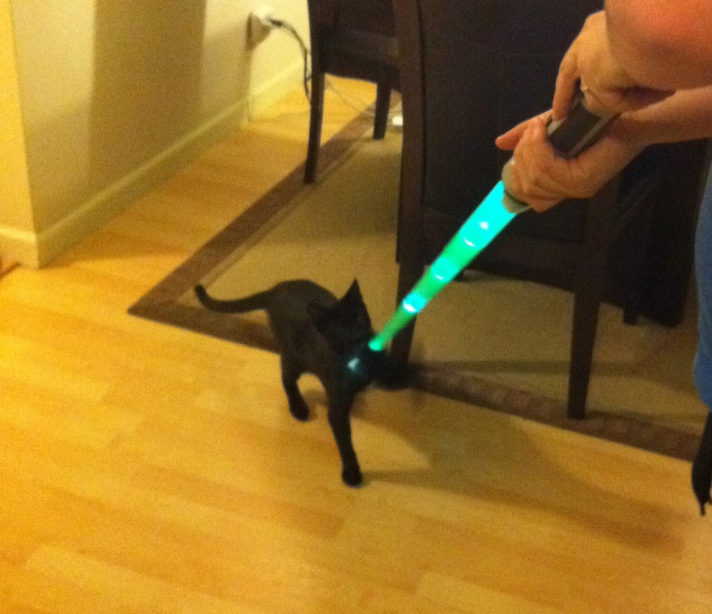 Cat playing with lightsaber