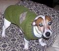 doggie argyle